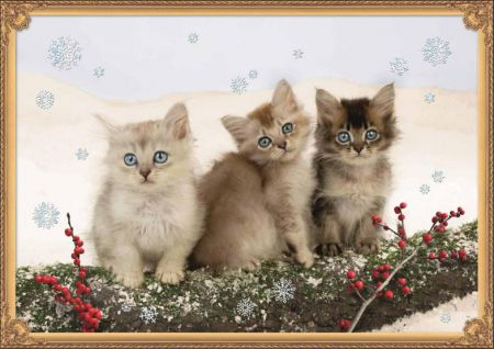Coppenrath Kittens in the Snow Traditional Advent Calendar 71578