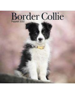 Border Collie Mini Calendar 2022 Carousel Calendars 220728