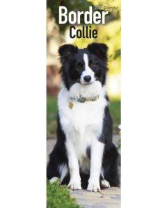 Border Collie Slim Calendar 2022 by Avonside Publishing 220729
