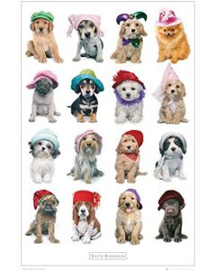 Keith Kimberlin Dogs in Hats Poster GN0534